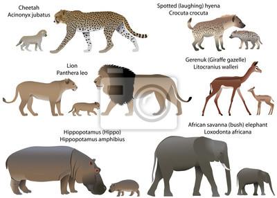 Fototapete Sammlung Tiere Mit Den Jungen, Die Im Gebiet Von Afrika Leben:  Löwe,