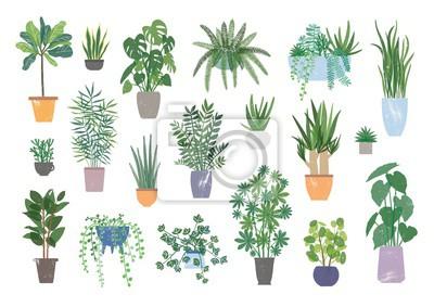 Fototapete Sammlung von dekorativen Zimmerpflanzen lokalisiert auf weißem Hintergrund.  Bündel trendiger Pflanzen, die in Töpfen oder Pflanzgefäßen wachsen.  Satz schöne natürliche Hauptdekorationen.  Flache bun