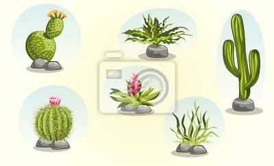 Sammlung von Kakteen und Wüstenpflanzen