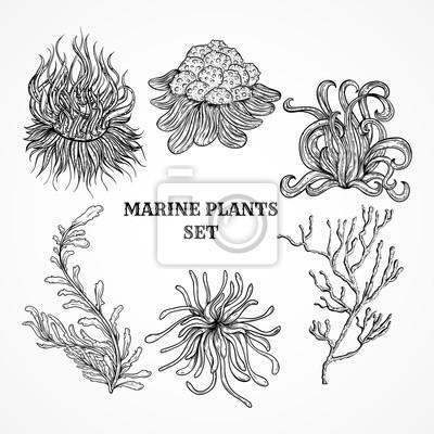 Fototapete Sammlung von Meerespflanzen, Blätter und Algen. Weinlese-Reihe von Schwarz-Weiß-Hand gezeichnet Meeresflora. Isolierten Vektor-Illustration in Strichzeichnungen style.Design für Sommer Strand, Dekorat