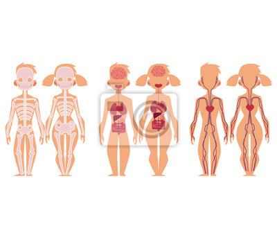 Satz pädagogisches anatomiendiagramm infographics - skelett ...