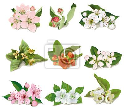 Satz von Blumen auf Obstbäumen