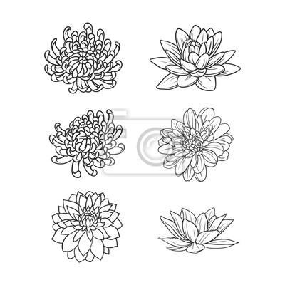 Satz Von Blumen Hand Zeichnen Fototapete Fototapeten Schone