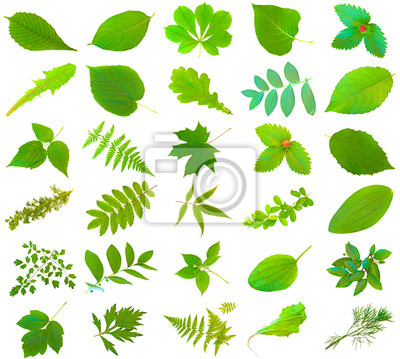 Satz von verschiedenen grünen Blättern