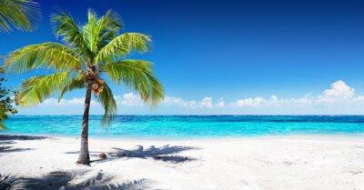 Fototapete Scenic Korallen Strand Mit Palme