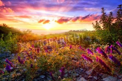 Fototapete Scenic Sonnenuntergang Landschaft mit gemischten Vegetation in der warmen Sonnenlicht und die bunte Himmel im Hintergrund