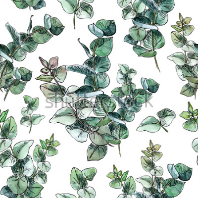 Fototapete Scheinloses Muster des Aquarells mit Babyblau-Eukalyptusblättern und -niederlassungen auf weißem Hintergrund
