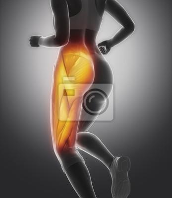 Schenkelmuskel weibliche anatomie fototapete • fototapeten Achilles ...