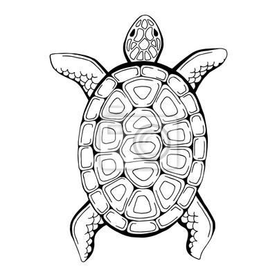 Schildkröte Tier Grafik Schwarz Weiß Isoliert Abbildung Vektor