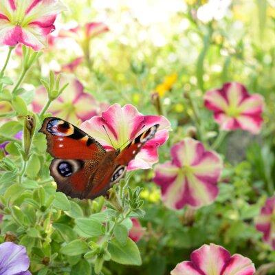 Fototapete Schmetterling 186