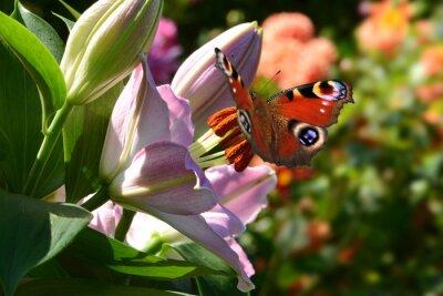 Fototapete Schmetterling 188