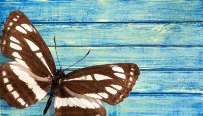 Fototapete Schmetterling.