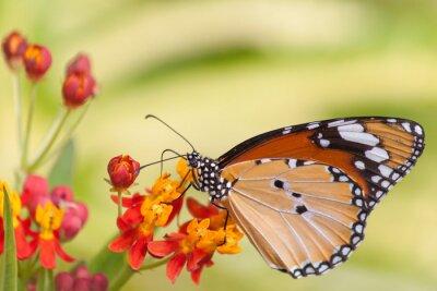 Fototapete Schmetterling auf Blume