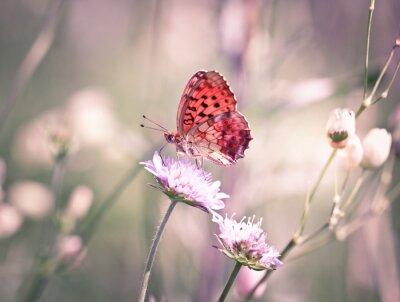 Fototapete Schmetterling auf der Wildblumen