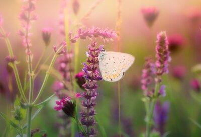 Fototapete Schmetterling auf der wilden Blume