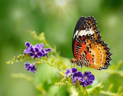Fototapete Schmetterling auf eine violette Blume