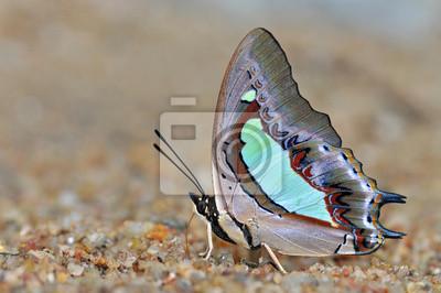 Schmetterling auf Natur