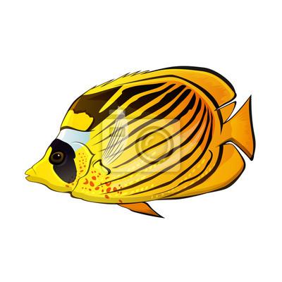 Schmetterling Fische Illustration
