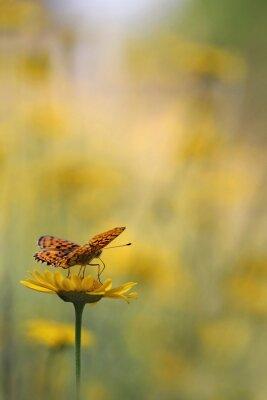 Fototapete Schmetterling im Garten