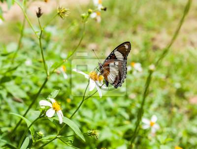 Schmetterling und weiße blume fototapete • fototapeten schöne ...