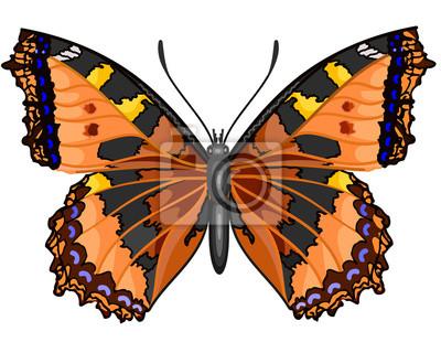 Schmetterling Vanessa cardui