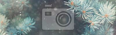 Fototapete Schnee fallen im Winterwald. Weihnachten Neujahr Magie. Blaue Fichte Tanne Zweige Detail. Bannerbild