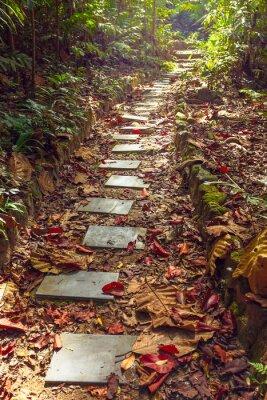 Fototapete Schöne Ansicht der Treppe zum Dschungel, Thailand