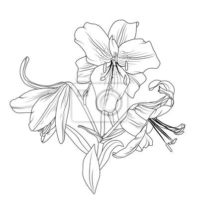 Schöne blühende lilie frühling blumen blumenstrauß zusammensetzung ...