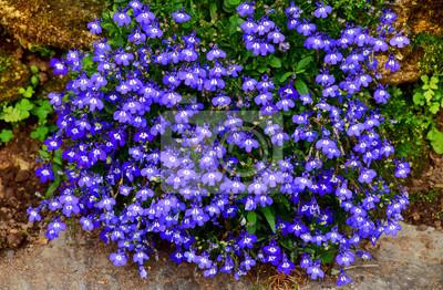Schöne Blumen Die Im Garten Blühen Fototapete Fototapeten Lila