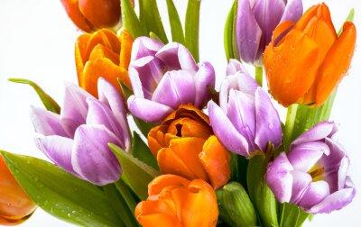 Fototapete Schöne Bouquet von lila und roten Tulpen isoliert auf weißem Hintergrund