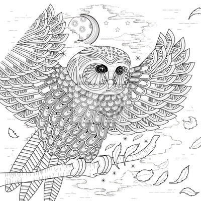 Schöne Eule Malvorlage Seite Fototapete Fototapeten Schöne Flügel
