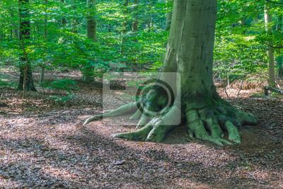 Schöne Feste Wurzel Baum Mit Waldlandschaft Fototapete Fototapeten