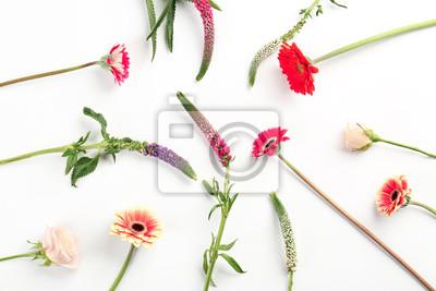 Schöne frische Blumen auf weißem Hintergrund