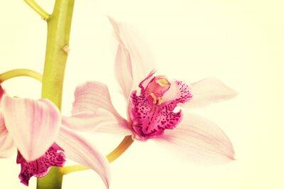 Fototapete Schöne frische rosa Lilie.
