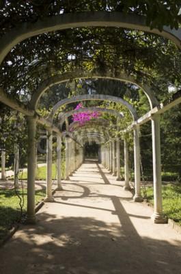 Fototapete Schöne gewölbte Pergola Infinite Pfad im Botanischen Garten, Rio de Janeiro, Brasilien