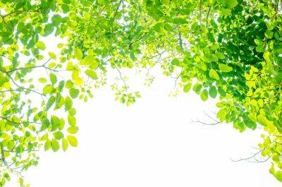 Fototapete Schöne grüne Blätter auf weißem Hintergrund