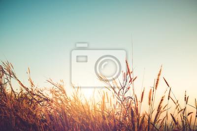 Fototapete Schöne Herbst Jahreszeit Hintergrund - wildes Gras mit Sonnenuntergang und blauer Himmel im Herbst.