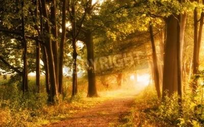 Fototapete Schöne Herbst-Szene lädt zu einem Spaziergang auf einem nebligen Fußweg im Wald mit Balken Sonnenlicht