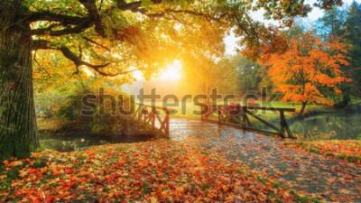 Fototapete Schöne Herbstlandschaft im Park. Outdoor-Fotografie bei Sonnenaufgang