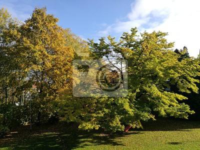 Fototapete: Schöne herbstliche bäume auf grünem rasen in einem garten in