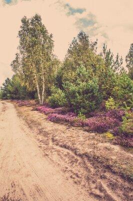 Fototapete Schöne ländliche Landschaft mit blühenden Heidekraut