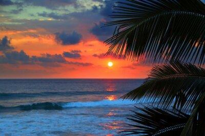 Fototapete schöne Meer Sonnenuntergang und Palmenblättern