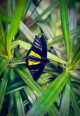 Fototapete Schöne Schmetterling sitzt auf einem großen Blatt