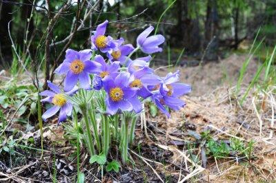 Schone Schone Contrave April Mai Wald Gras Fruhjahr Wald Blumen