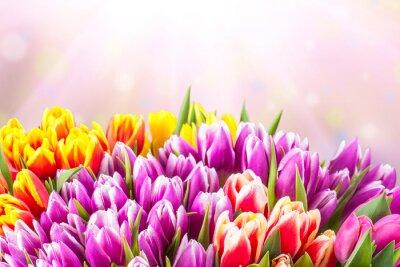 Fototapete Schöne Tulpe Blumen