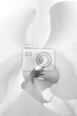 Schöne weiße blume orchideen blühen vagina clitori fototapete ...