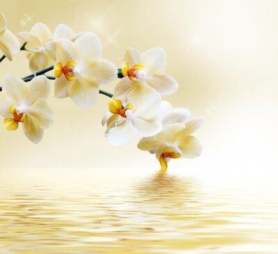 Fototapete Schöne weiße Orchidee