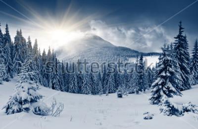 Fototapete Schöne Winterlandschaft mit Schnee bedeckte Bäume