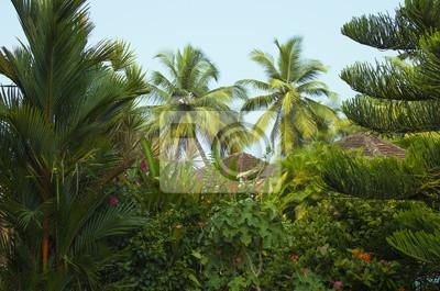 Schönen garten der tropischen pflanzen fototapete • fototapeten ...