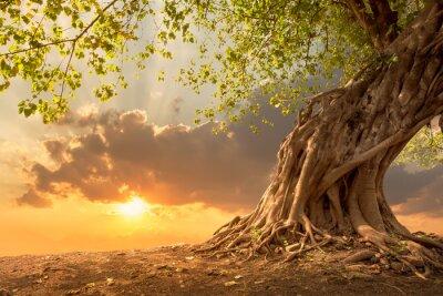Fototapete Schöner Baum am Sonnenuntergang vibrierende Orange mit freiem Exemplarplatz.